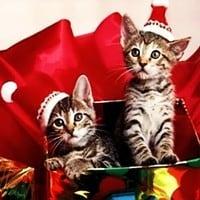 Christmas Electronic Dance Music Songs for You