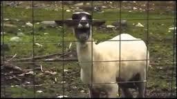 5 Goat Edition Electronic Music Remixes