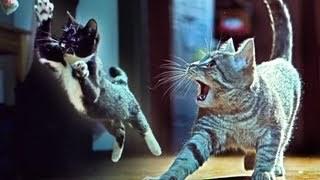 Savant - Wildstyle (Unofficial Kitties on the Beat Video)
