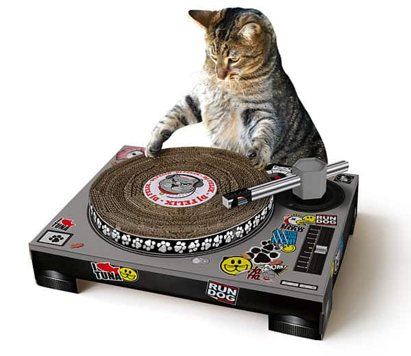 5 DJs Who Are Celebrating National Cat Day