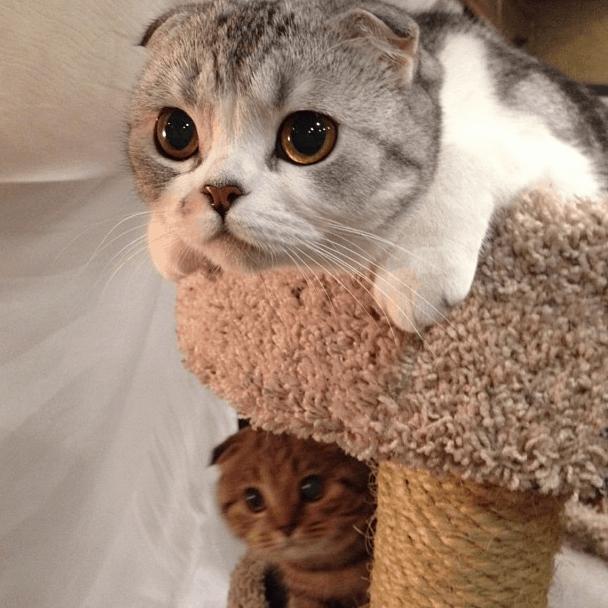 kitty lights