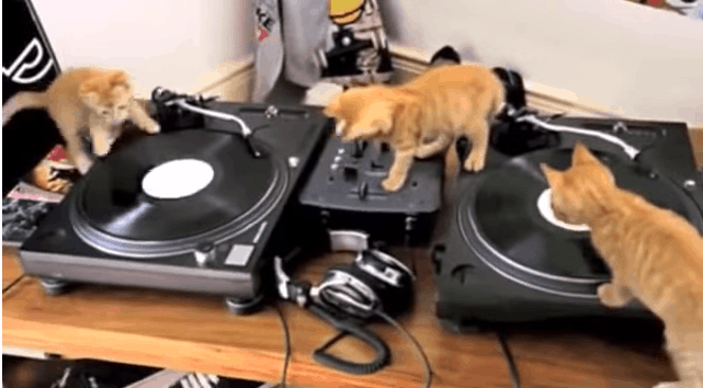 These Adorable Kittens Just Can't Figure Out How To DJ