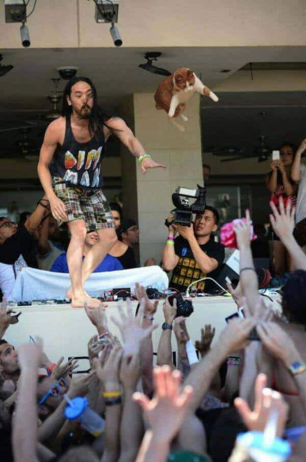 5 Photos Of Steve Aoki Throwing Cats Instead Of Cakes